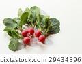 ผัก,อาหาร,สวนครัว 29434896