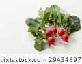 ผัก,อาหาร,สวนครัว 29434897