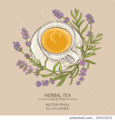 cup of lavender tea 29435623