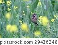 bird, birds, fowls 29436248