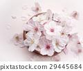 Cherry Blossom 29445684