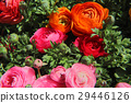 red, pink, bloom 29446126