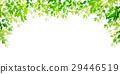 翠綠 鮮綠 葉子 29446519