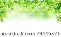 tender, green, verdure 29446521