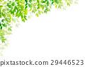 新的綠色葉子綠色背景 29446523