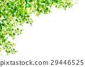 新的綠色葉子綠色背景 29446525