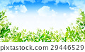 翠綠 鮮綠 葉 29446529