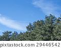 구름, 하늘, 푸른 29446542