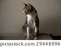 Cat 29448996