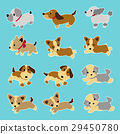 animal, animals, dog 29450780
