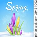 flower, crocus, spring 29454002