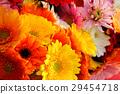 gerbera, gerberas, bloom 29454718