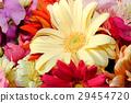 gerbera, gerberas, bloom 29454720