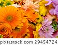 gerbera, gerberas, bloom 29454724