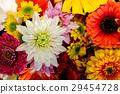 gerbera, gerberas, bloom 29454728