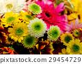 gerbera, gerberas, bloom 29454729