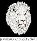 頭部 頭 獅子 29457643
