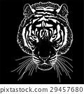 벡터, 머리, 동물 29457680