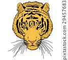 老虎 虎 插圖 29457683