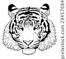 老虎 虎 插圖 29457684