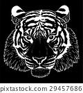 tiger illustration vector 29457686