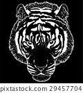 老虎 虎 插圖 29457704