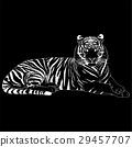 벡터, 동물, 호랑이 29457707
