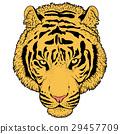 老虎 虎 插圖 29457709
