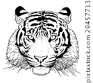 老虎 虎 插圖 29457713