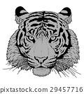 tiger illustration vector 29457716