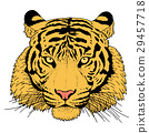 老虎 虎 插圖 29457718