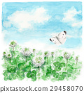 clover, white clover, small cabbage white butterfly 29458070
