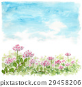 field of lotus flowers, lotus flower, astragalus 29458206