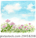 field of lotus flowers, lotus flower, astragalus 29458208