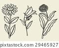 Calendula flower isolated 29465927