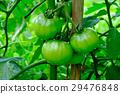 西红柿 番茄 背景 29476848