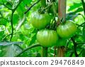 西红柿 番茄 背景 29476849