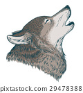 Vector illustration of a howling wolf 29478388