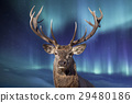 male deer in northern lights background 29480186