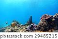 鱼 水生的 水下 29485215