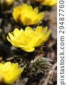花朵 花 花卉 29487760