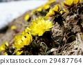 花朵 花 花卉 29487764