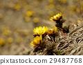 花朵 花 花卉 29487768