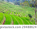Rice terraces at Jati Luwih Villange 29488624