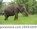 Elephants 29491049