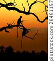 monkey, sunset, wildlife 29491157