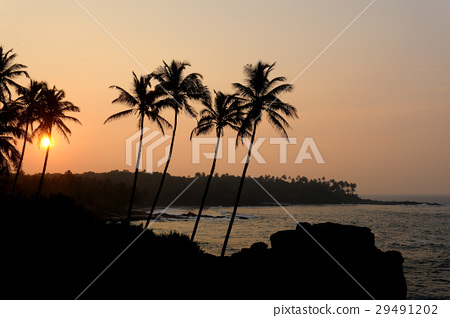 Tropical sunset 29491202
