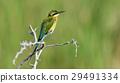 wildlife green nature 29491334