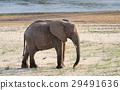 elephant, nature, animal 29491636