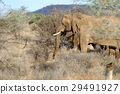 elephant, nature, animal 29491927